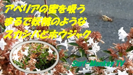 0910sukashiba.jpg