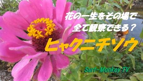 1009花.jpg