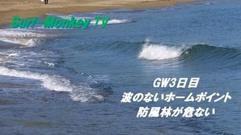 000防風林s.jpg