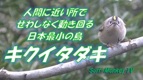 0219菊戴.jpg