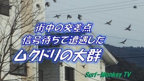 0222鳥.jpg