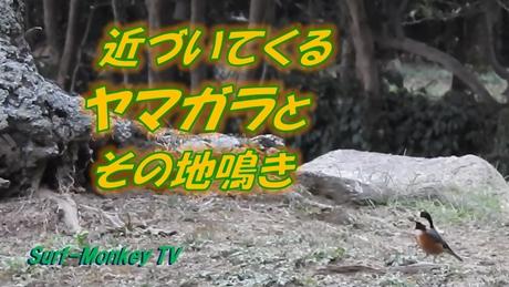 0225ヤマガラ.jpg