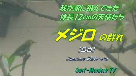 0722メジロ2.jpg